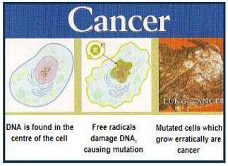 สาเหตุการเกิดมะเร็ง